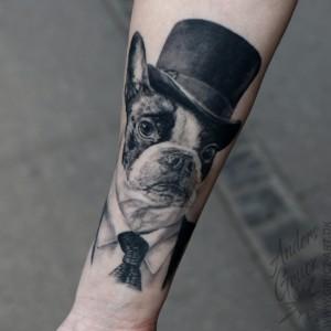 Hunde portræt